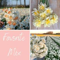 Favorite Mix