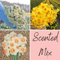 Scented Mix